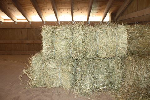 Hay For 1  Month